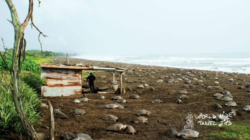 Ostional Wildlife Refuge Nicoya Peninsula Costa Rica