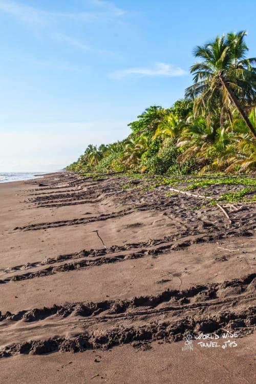 Sea Turtle Tracks on the Beach in Costa rica