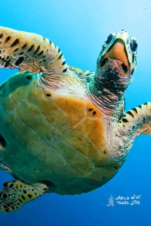 Sea Turtle Turtoise Costa Rica Animals